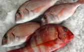 Marisquerias Malaga
